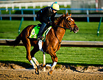 LOUISVILLE, KY - APRIL 29: Hofburg, trained by Bill Mott, exercises in preparation for the Kentucky Derby at Churchill Downs on April 29, 2018 in Louisville, Kentucky. (Photo by John Voorhees/Eclipse Sportswire/Getty Images)