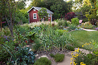 Vegetable garden by small lawn with garden tool shed Habets backyard garden, Pleasant Hill