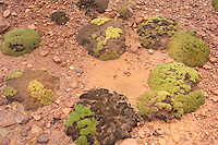 BOLIVIA- PULACAYO MINE AREA <br /> Stone-hard moss cushions in neon-green show an amazing colour contrast with the bright red and orange of the mountains <br /> <br /> Full size: 69,2 MB