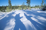 Shadows of cross country skiers at Lolo Pass ski area on the Montana - Idaho border