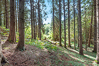BNPS.co.uk (01202 558833)<br /> Pic: Symonds&Sampson/BNPS<br /> <br /> 10 acres of woodland...<br /> <br /> £125,000 - For your own idyllic rustic hideaway...<br /> <br /> Fancy the unique chance to own a remote woodland shack in its own private valley near Lyme Regis in Dorset?<br /> <br /> The timber chalet, with a pond, decking and a log bridge across a stream, is buried in the middle of 10 acres of private woodland near the seaside resort.<br /> <br /> The primitive but eco-friendly chalet can be slept it overnight but can't be used as a permanent residence.