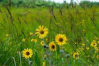 Tallgrass Prairie Wildflowers