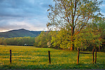 Great Smoky Mountains National Park, Tennessee:<br /> Evening sunlight and clearing storm in  Cades Cove, early spring