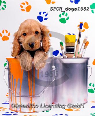 Xavier, ANIMALS, REALISTISCHE TIERE, ANIMALES REALISTICOS, dogs, photos+++++,SPCHDOGS1052,#a#, EVERYDAY