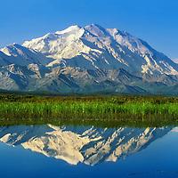 20, 3020+ Ft. Mt. Denali reflects In A Tundra Pond, Denali National Park, Alaska.