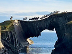 Goats crossing cliff by Beth Cradick