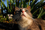 Dusty the cat, Springdale Farms