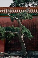 China, Kaiserpalast von Peking, im Garten des ruhevollen Alters, Unesco-Weltkulturerbe