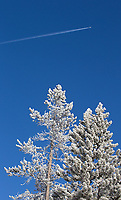 A plane flies high above frozen trees in Yellowstone National Park.