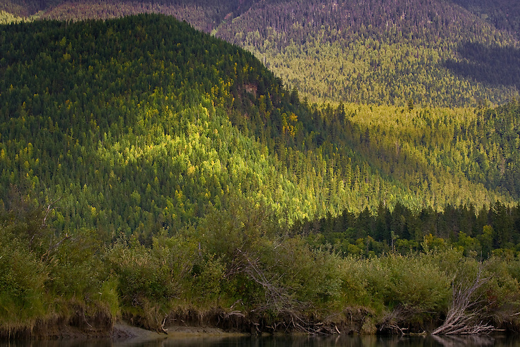 Fall colour highlighted in sunshine on the hills around the Mitchell River