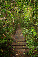 Landscape with a boardwalk inside of a lush green rainforest, Indio Maiz Biological Reserve, Nicaragua