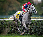 ELMONT, NY - OCTOBER 08: Power Alert #6, ridden by Mike Smith, after making the turn for home during the 1st Running of The Belmont Turf Sprint Invitational, on Jockey Club Gold Cup Day at Belmont Park on October 8, 2016 in Elmont, New York. (Photo by Douglas DeFelice/Eclipse Sportswire/Getty Images)