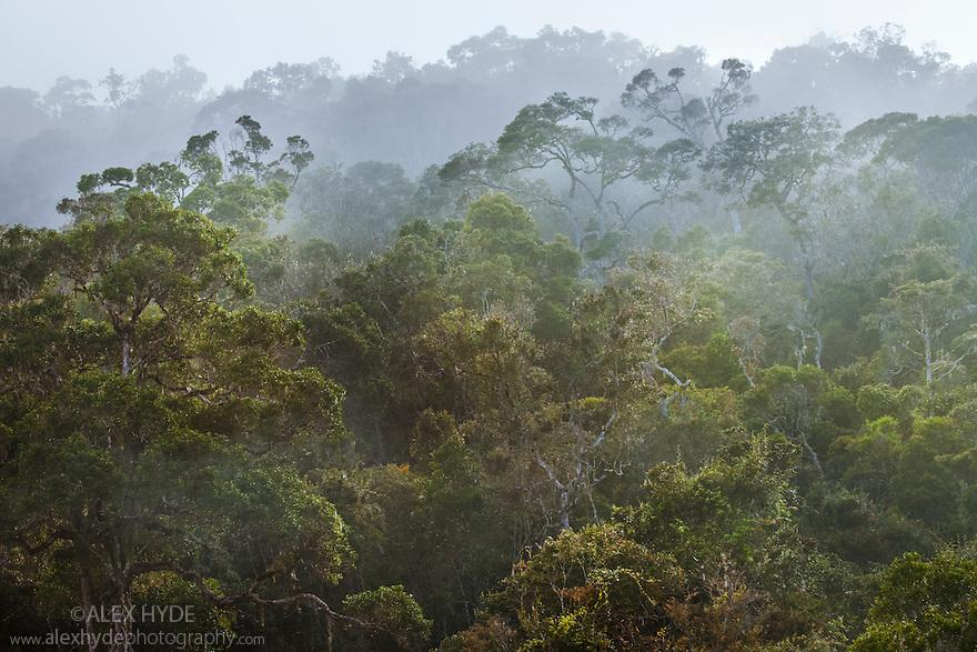 Tropical rainforest, Andasibe-Mantadia National Park, Eastern Madagascar.