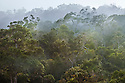 Tropical rainforest, Andasibe-Mantadia National Park, Eastern Madagascar.