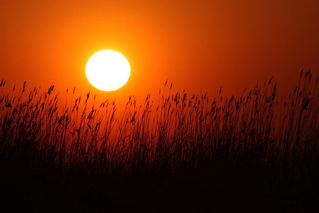 A pristine sky showcasing the low set sun over a bed of reeds at Maryland's Eastern Shore sleepy town of Rock Hall