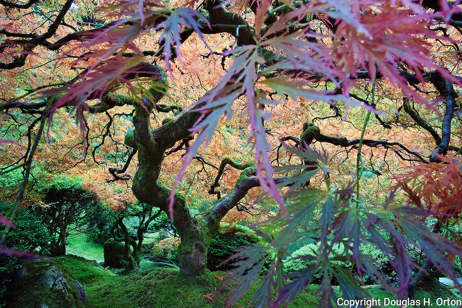 Hidden Sanctuary, under the maple.  Portland, Oregon.  The Japanese Garden in Portland is a 5.5 acre respit.  Said to be one of the most authentic Japanese Garden's outside of Japan, the rolling terrain and water features symbolize both peace and strength.