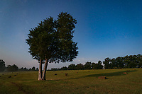 Lone tree in a field at night. Lighting provided by the full moon. Photo/Andrew Shurtleff Photography, LLC