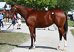 10 September 2011.Hip #41 Giant's Causeway - Bless filly.