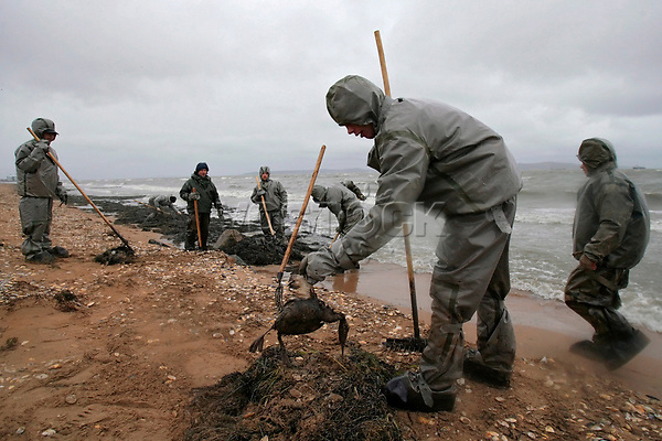epa01171694 Russian Emergency Ministry servicemen collect dead birds and seaweed, polluted with fuel oil on the Black Sea shore at Port Kavkaz in the Kerch Strait, Krasnodar region, 13 November 2007. A Russian tanker carrying four thousand tonnes of fuel oil broke into parts in the Kerch Strait during a powerful storm 11 November. Two thousand tonnes of fuel oil leakage into the Black Sea and caused the death of 30 thousand birds.  EPA/YURI KOCHETKOV