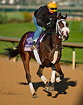 Stephanie's Kitten, trained by Wayne Catalano and to be ridden by Tyler Pizarro exercises in preparation for the 2011 Breeders' Cup at Churchill Downs on November 1, 2011.