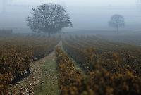Europe/France/Pays de la Loire/Maine-et-Loire/Souzay-Champigny : Le vignoble AOC Saumur