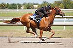 #103Fasig-Tipton Florida Sale,Under Tack Show. Palm Meadows Florida 03-23-2012