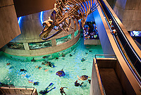 National Aquarium, Inner Harbor, Baltimore, Maryland, USA