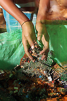 An electronics waste recycler handles circuit boards which have been partially dismantled. Lead, mercury, arsenic and other toxic elements are released when these electronics are broken down.  India. November, 2013