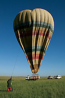 Landing the hot air balloon, Masai Mara, Kenya