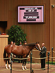 11 September 2011.Hip #87 A.P. Indy - Malka colt topped the first session of the sale when he sold for $1,400,000.   Consigned by Hill n'Dale Sales.