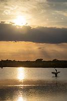 A lone heron perches on a bush n the marshes at sunset near Merritt Island, FL, March 2020.(Photo by Brian Cleary/bcpix.com)