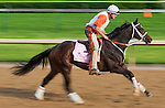 Believe You Can during morning workouts for the 138th Kentucky Oaks at Churchill Downs in Louisville, Kentucky on May 3, 2012.