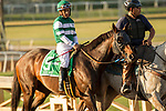 )ARCADIA, CA  MARCH 11: #5 Hard Aces, ridden by Victor Espinoza, in the post parade of the Santa Anita Handicap (Grade l) on March 11, 2017 at Santa Anita Park in Arcadia, CA (Photo by Casey Phillips/Eclipse Sportswire/Getty Images)