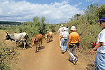 Earthwatchers Walking Alongside Cattle