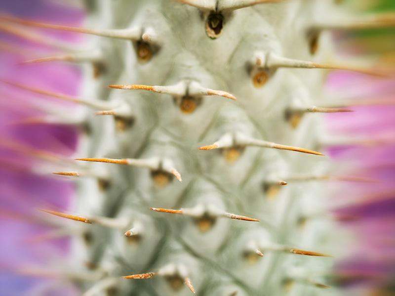 Close up of cactus needles.