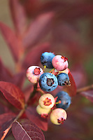 """Synchronous Seasons""<br />