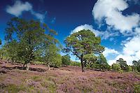Glen Lui on the Mar Estate, Cairngorm National Park, Aberdeenshire