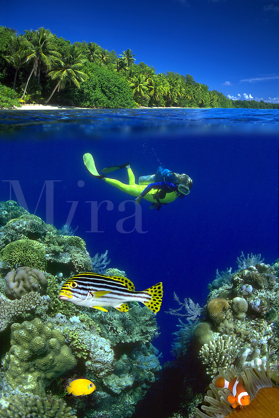 The oriental sweetlips, Plectorhinchus orientalis, lemonpeel angelfish, Centropyge flavissimus, and clown anemonefish, Amphiprion ocellaris, were all digitally added to this split reef scene with a diver (MR). Palau, Micronesia.