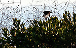 Bird in Bush 2, Crystal cove, CA.