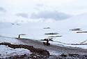Iran 1981.Mountains, snow and shepherds with their flocks near Engawe<br /> Iran 1981. L'hiver, pres d' Engawe, bergers et leurs troupeaux dans la neige