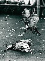 Hahnenkampf auf  Bali,  Indonesien 1972