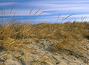 Beach grass grasslands at Hampton Beach State Park in Hampton Beach, New Hampshire USA