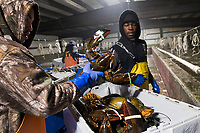 Island Seafood - Lobster Dealer and Packager - Eliot and Kittery, Maine - 31 Jan 2018