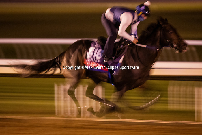 November 1, 2020: Yaupon, trained by trainer Steven M. Asmussen, exercises in preparation for the Breeders' Cup Sprint at Keeneland Racetrack in Lexington, Kentucky on November 1, 2020. Alex Evers/Eclipse Sportswire/Breeders Cup /CSM