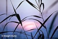 SU16-001a  Sun back lighting grasses