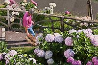 Europe/France/Aquitaine/64/Pyrénées-Atlantiques/Pays-Basque/Biarritz: Escaliers et jardins d'Hortensias au dessus de la  Grande Plage