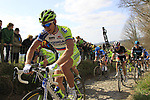 The peloton including Peter Sagan (SVK) Liquigas-Cannondale climbs Koppenberg during the 96th edition of The Tour of Flanders 2012, running 256.9km from Bruges to Oudenaarde, Belgium. 1st April 2012. <br /> (Photo by Eoin Clarke/NEWSFILE).
