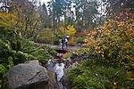 Bellevue Botanical Garden, Bellevue, Washington, State, Pacific Northwest, USA,
