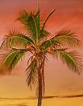 Palm tree at sunset, Bora Bora, French Polynesian