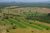 ETHIOPIA, Gambela, the government give large land for cheap lease to domestic and foreign investors, after deforestation the investors cultivate large farm lands with food crop for export, local people are often settled under villagization programs  / AETHIOPIEN, Gambela, die aethiopische Regierung verpachtet grosse Landflaechen an Investoren fuer den Anbau von Nahrungsmitteln fuer den Export, Waldflaechen werden abgeholzt, Umsiedlung der lokalen Bevoelkerung fuehrt zu Konflikten